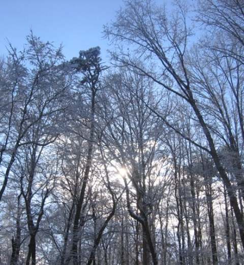 Sun rising in winter